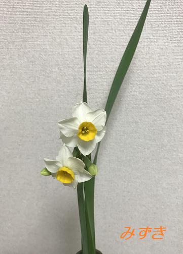 f:id:mizuki5482:20161214135440p:plain