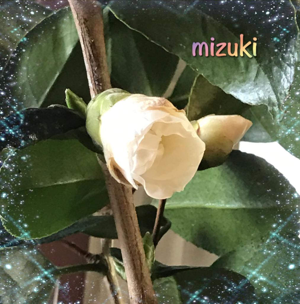 f:id:mizuki5482:20161220174451p:plain