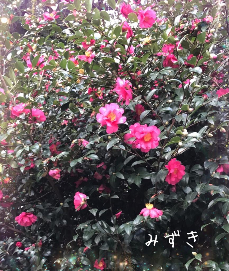 f:id:mizuki5482:20170105170854j:plain