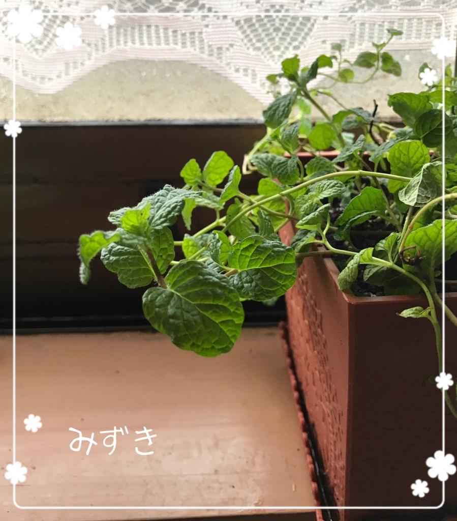 f:id:mizuki5482:20170322181418j:plain