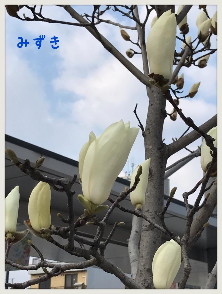 f:id:mizuki5482:20170330162522j:plain