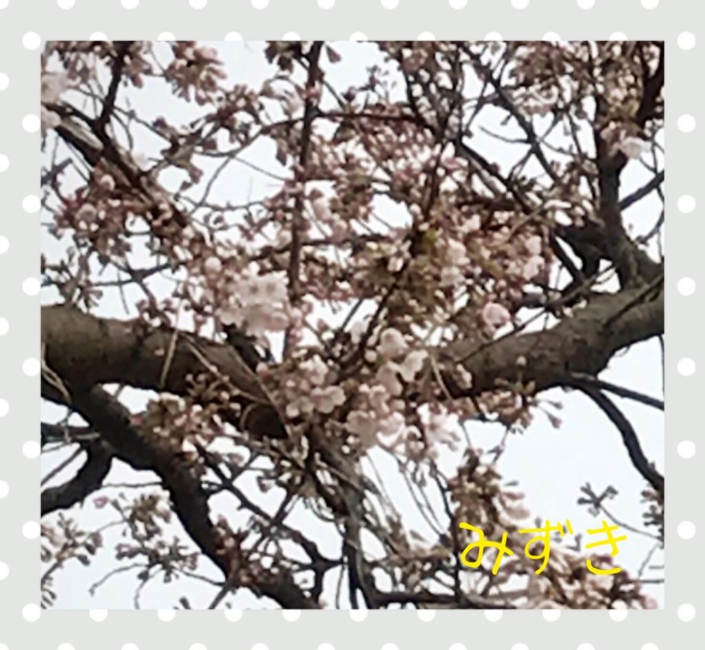 f:id:mizuki5482:20170406171502j:plain