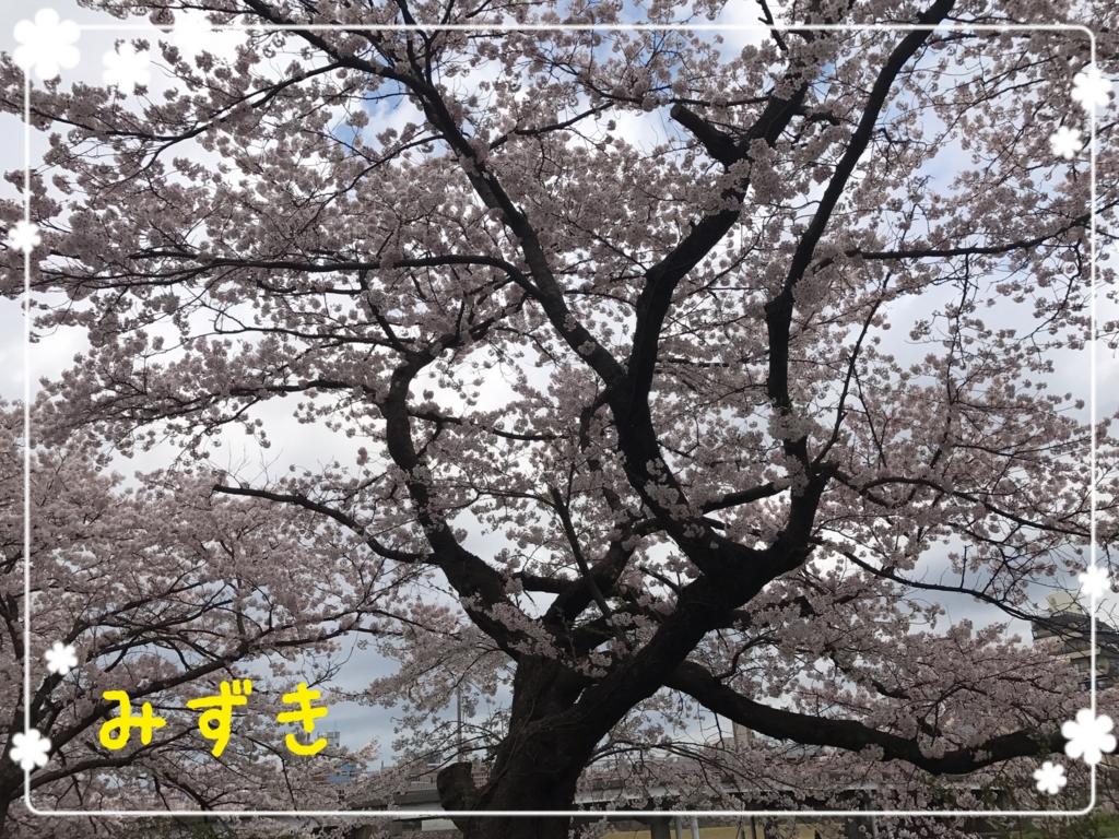 f:id:mizuki5482:20170413113101j:plain