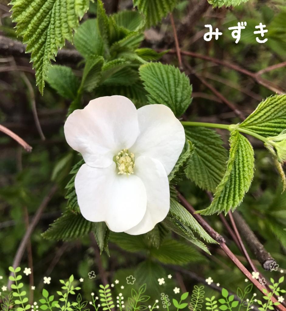 f:id:mizuki5482:20170414170641j:plain
