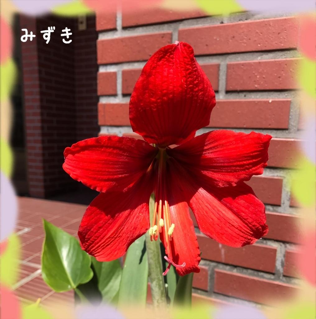 f:id:mizuki5482:20170622113548j:plain