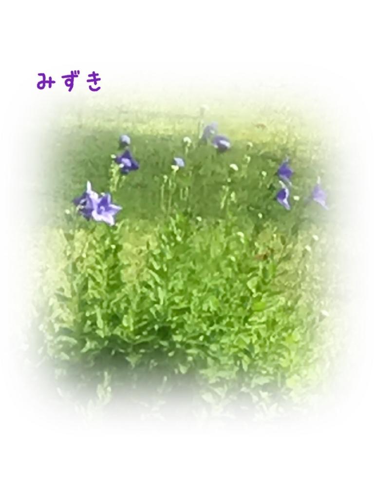 f:id:mizuki5482:20170623120709j:plain