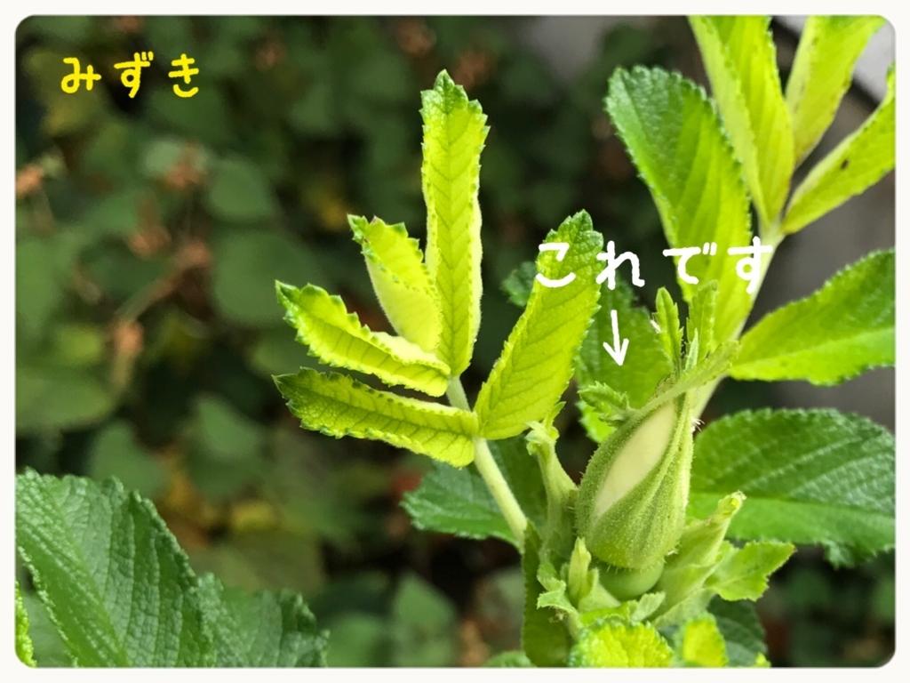 f:id:mizuki5482:20170627160645j:plain