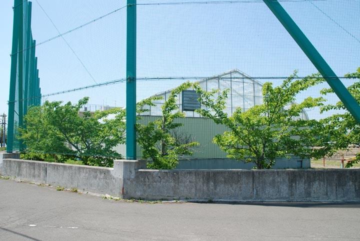 f:id:mizuki_akise:20100619225602j:image
