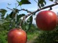 りんごの町 岩木山のふもと