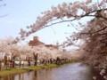 弘前公園 外堀の桜