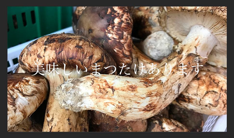 f:id:mizumotohideto:20161010151529p:plain