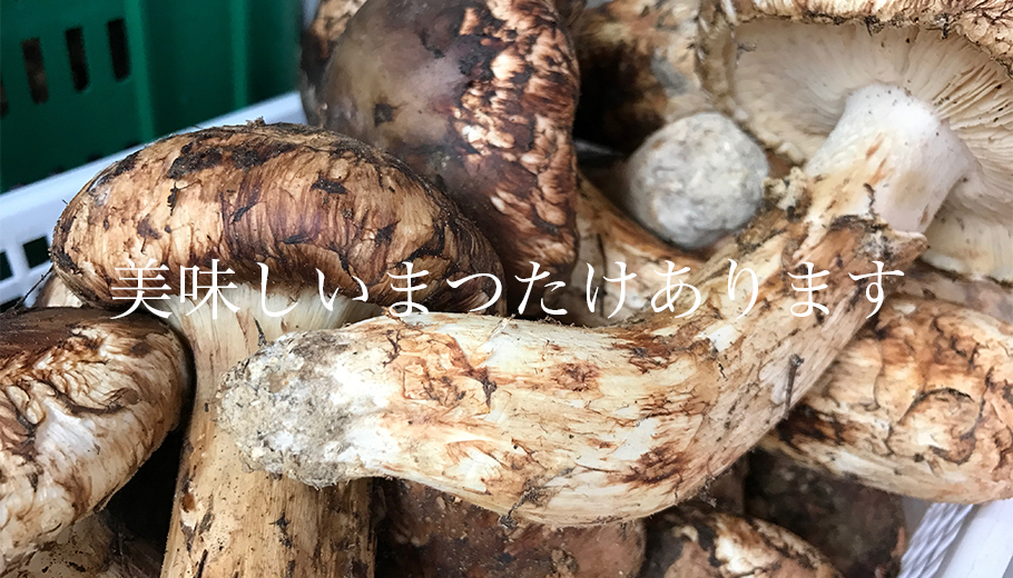 f:id:mizumotohideto:20161010152532j:plain