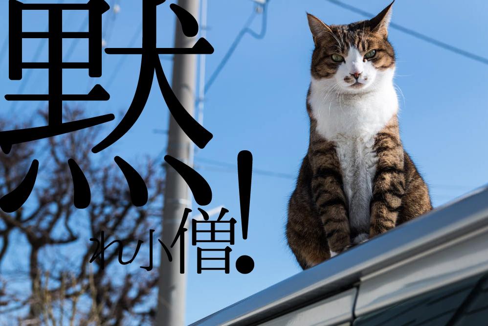 f:id:mizumotohideto:20161121081338j:plain
