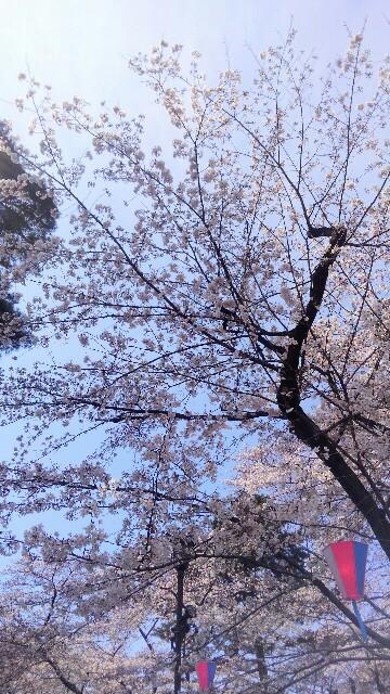 f:id:mizuna589:20170402193718j:image