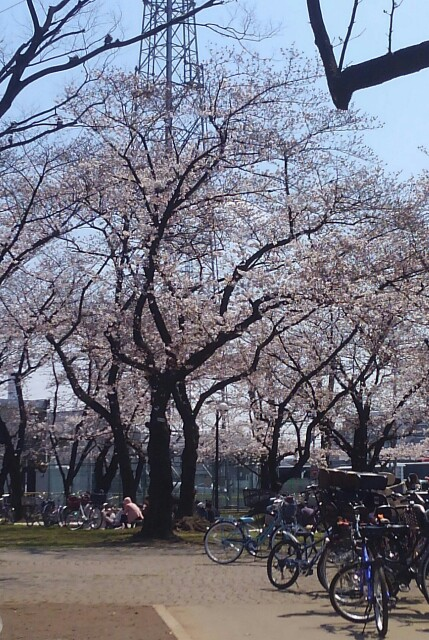 f:id:mizuna589:20170404130714j:image