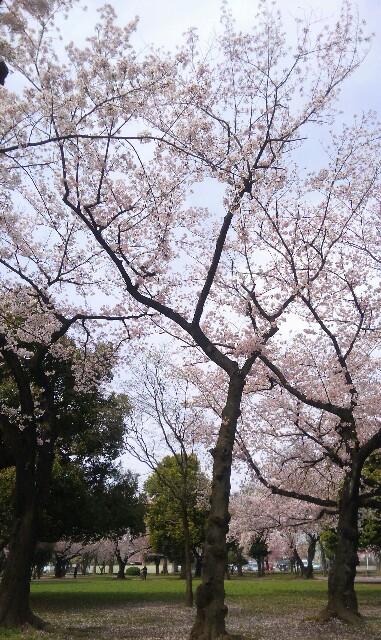 f:id:mizuna589:20170410105318j:image