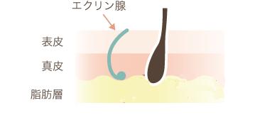 f:id:mizunomori-biyougeka:20170517133420p:plain