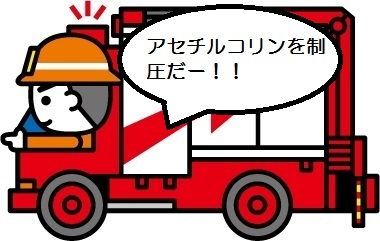 f:id:mizunomori-biyougeka:20170621134959j:plain