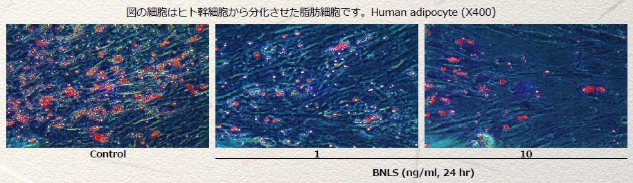 f:id:mizunomori-biyougeka:20180619120644j:plain