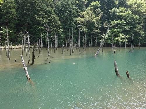 蒼霧鯉池全景