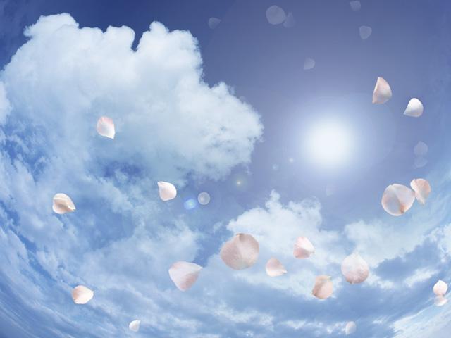 青空に舞うピンクの花弁