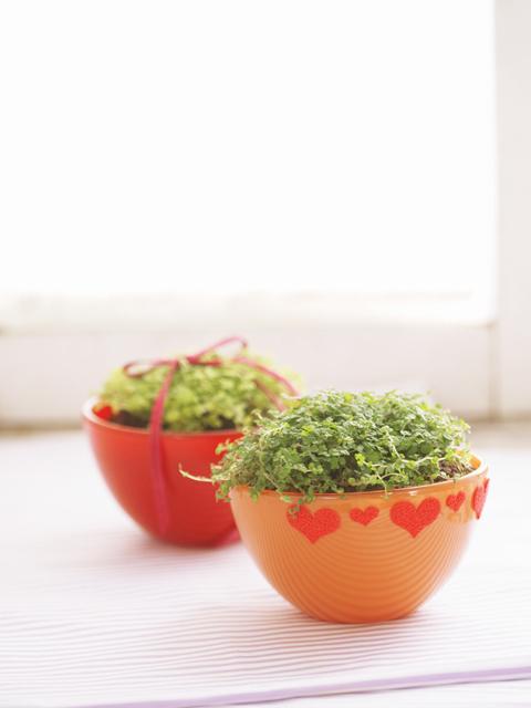 小さな観葉植物の鉢が2つ