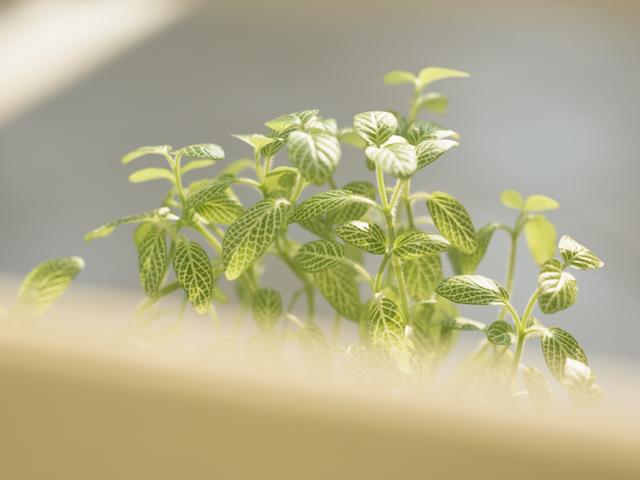 やわらかな葉の観葉植物