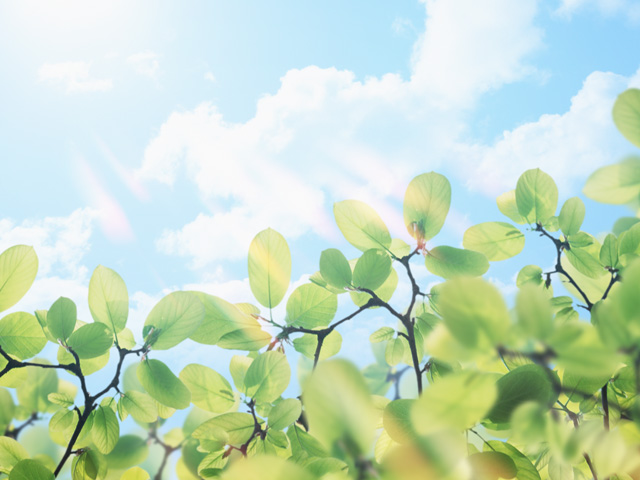 緑の草花とさわやかな青空
