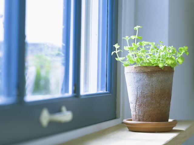 窓辺にある観葉植物の鉢