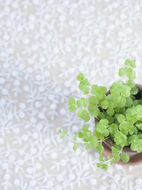 小さな観葉植物の鉢