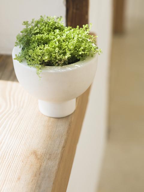 カウンターにある観葉植物の鉢