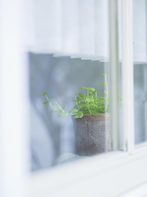窓の外から見える鉢植え