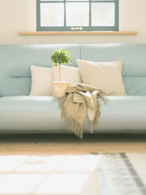 空色の長椅子とベンジャミンの鉢植え