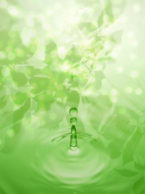 緑の中にひとしずく