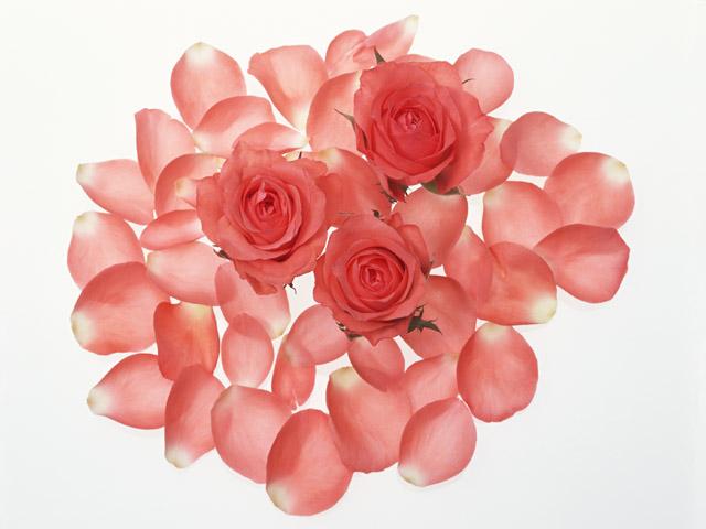 薔薇とはなびら