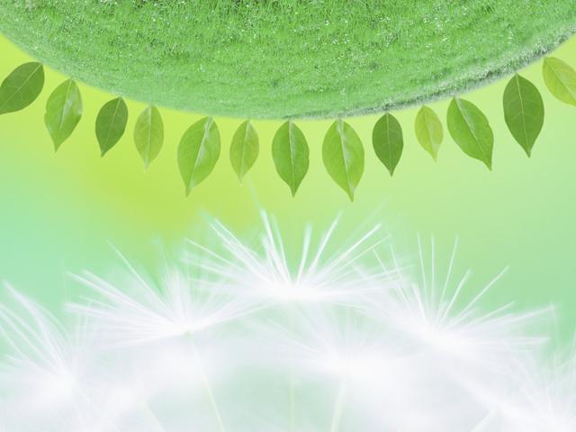 タンポポの綿毛と緑の葉