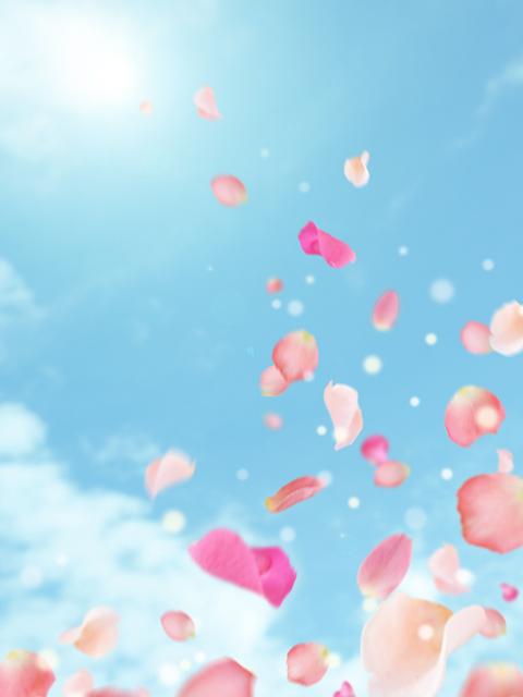 青空に舞い上がる花びら
