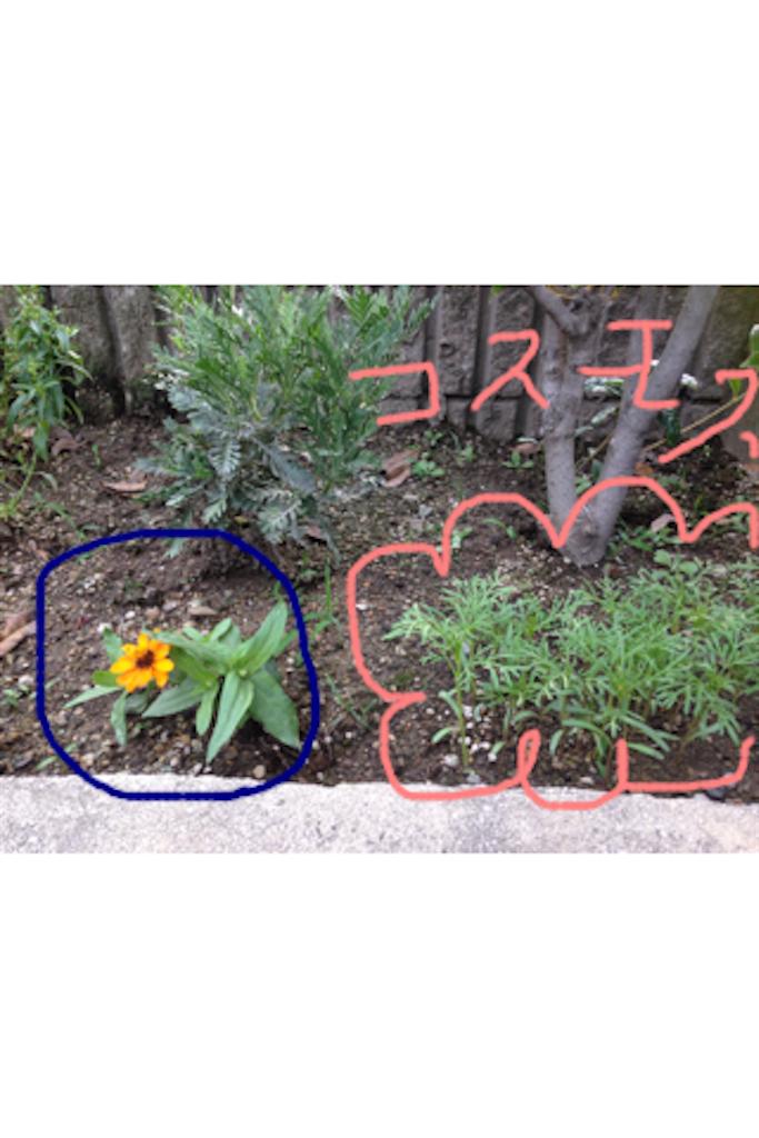 f:id:mizutamama:20170628202806p:image