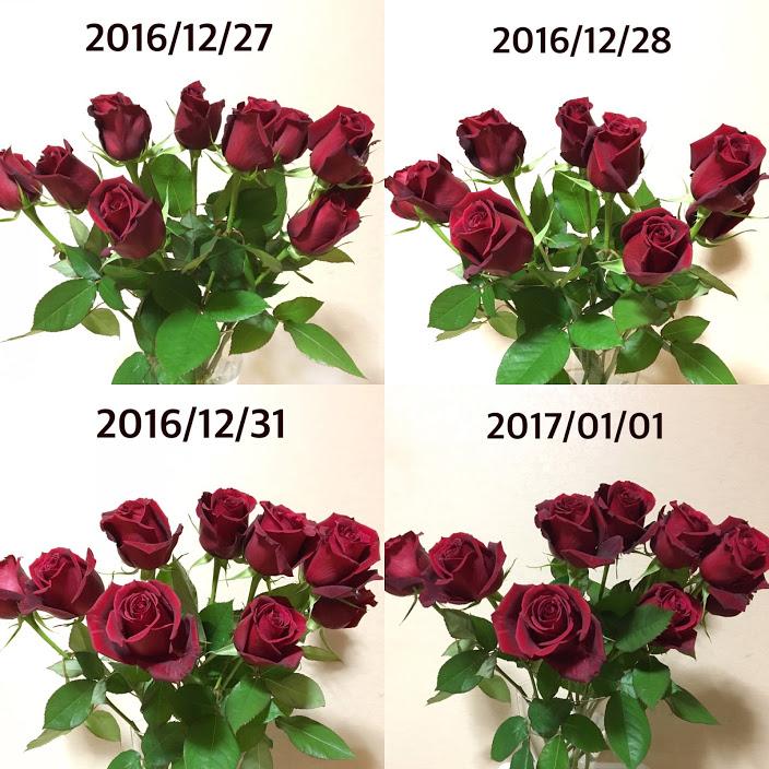 f:id:mizutukuri:20170112174110j:plain:w250