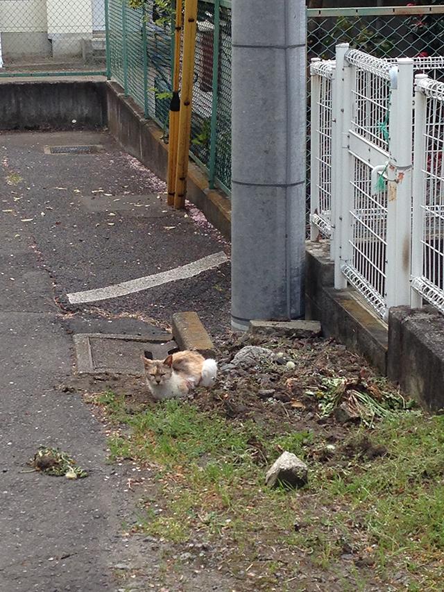 f:id:mizuusagi2004:20171011092647j:plain
