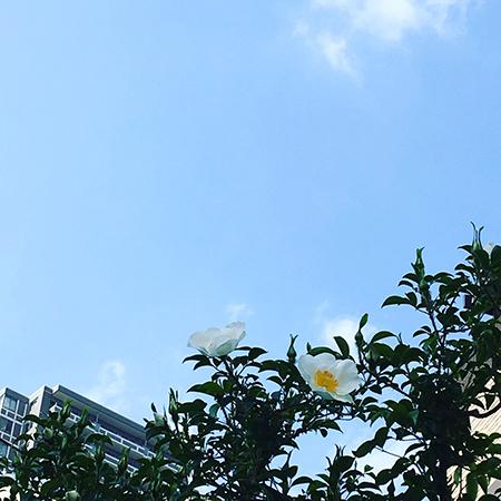 f:id:mizuusagi2004:20180412162613j:plain