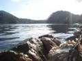 [牡蠣][風景][三陸][気仙沼][リアス][森][海][森は海の恋人][牡蠣]カキじいさん(舞根湾)