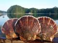 [牡蠣][風景][気仙沼][三陸][リアス][森][海][森は海の恋人][牡蠣]夏の旬