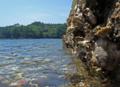 [牡蠣][風景][気仙沼][三陸][リアス][森][海][森は海の恋人][牡蠣]リアスの海辺から(舞根湾)