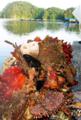 [牡蠣][風景][三陸][リアス][森][海][森は海の恋人][牡蠣][気仙沼][多様性]生物多様性の背景