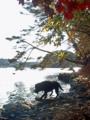 [牡蠣][風景][三陸][リアス][森][海][森は海の恋人][牡蠣][気仙沼]秋、舞根湾