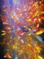[生物][風景][リアス][三陸][牡蠣][森][海]金魚屋敷