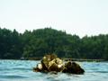[生物][風景][リアス][三陸][牡蠣][森][海]ひなたぼっこ(舞根湾)