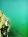 [生物][風景][リアス][三陸][牡蠣][森][海]緑海(舞根湾)