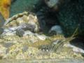 [生物][風景][リアス][三陸][牡蠣][森][海]カキじいさんとえびちゃん